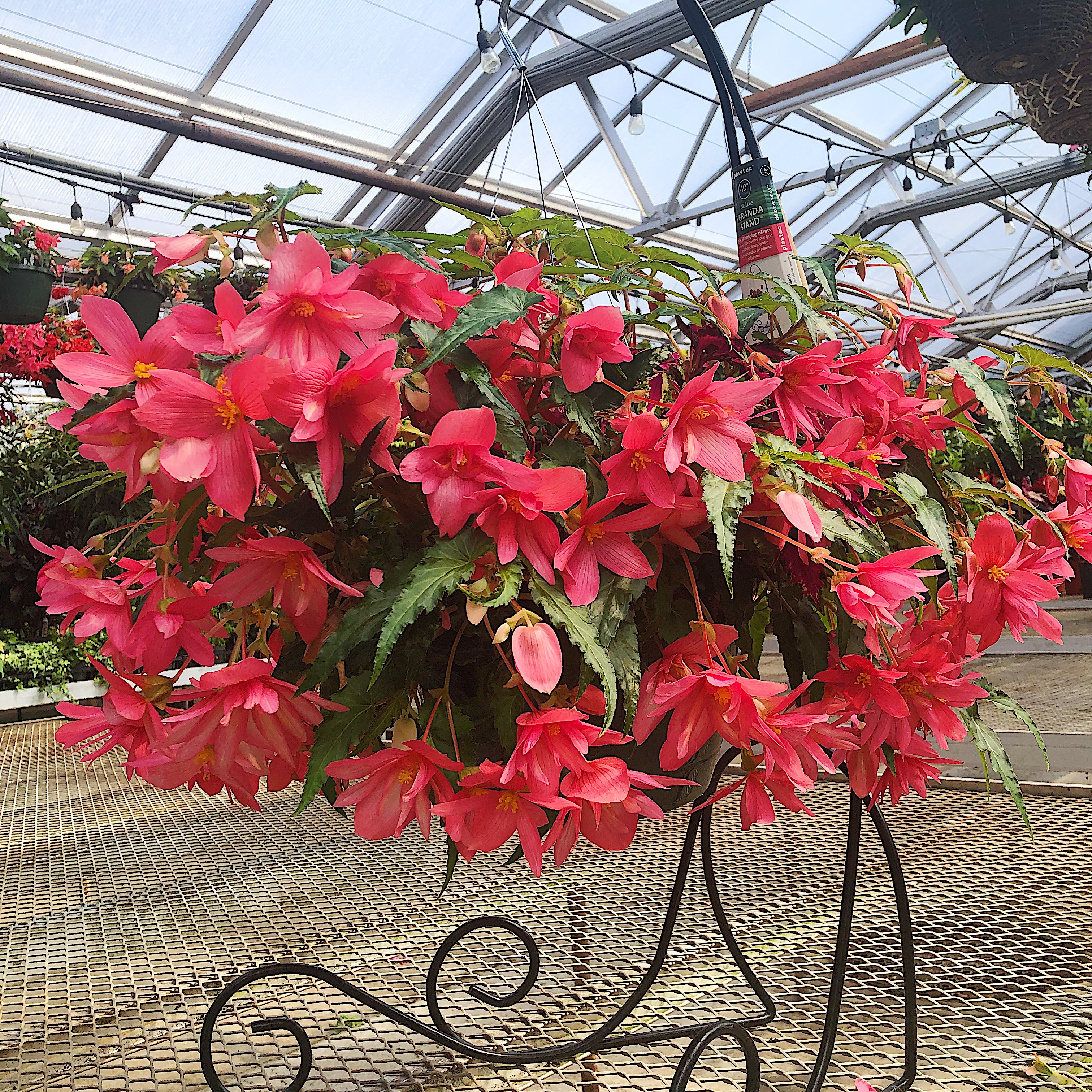 Classic Hanging Baskets