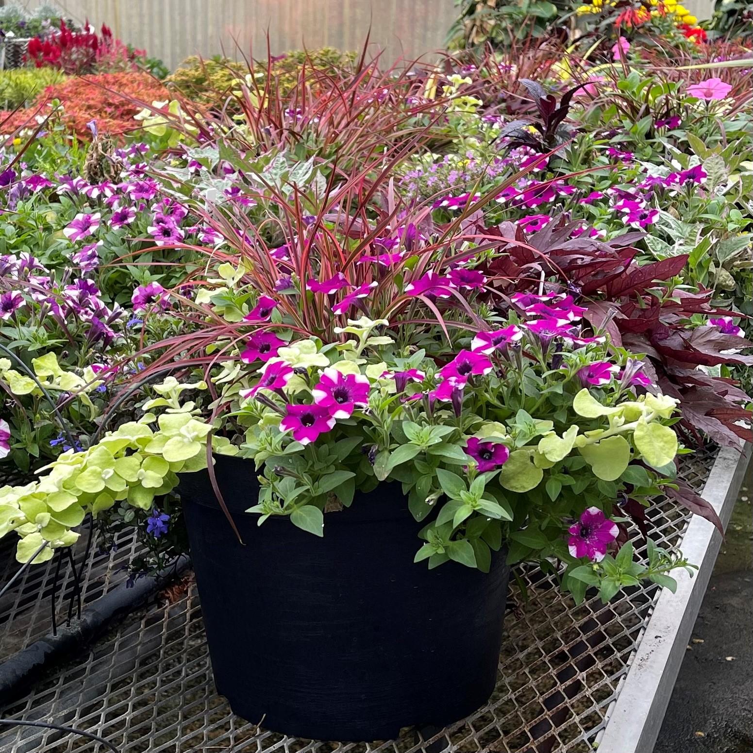 Mixed Annual Garden