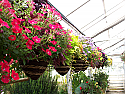 Hanging Basket Woven Cone