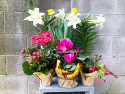 Joyful Spring Plant Collection