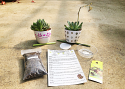 Kid-Friendly Planting Design Kit - Succulent Plant