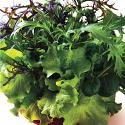 Lettuce - Simply Salad Garden Mix