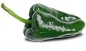 Pepper Ancho