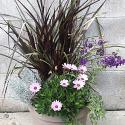 Fall Annual Planter