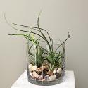 Artistic Air Plants